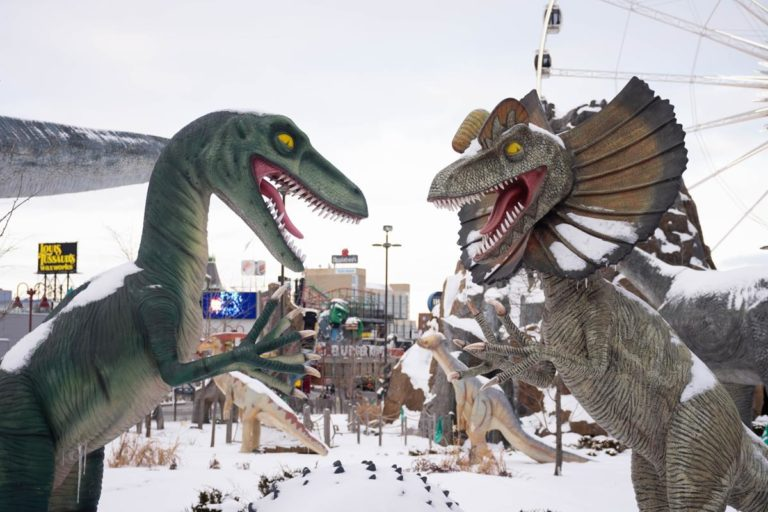 Park rozrywki w Polsce – wspaniałe miejsce na wyjazd