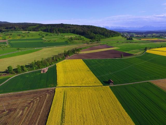 W jaki sposób zapewnić ochronę upraw ziemniaków?